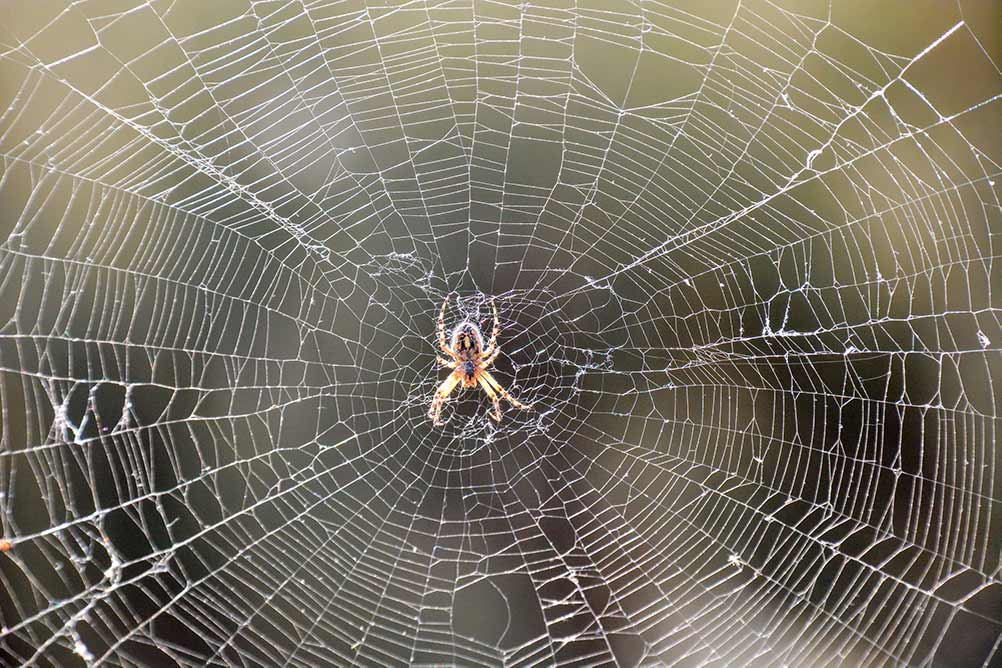 Picture of spider on web in Baton Rouge Louisiana