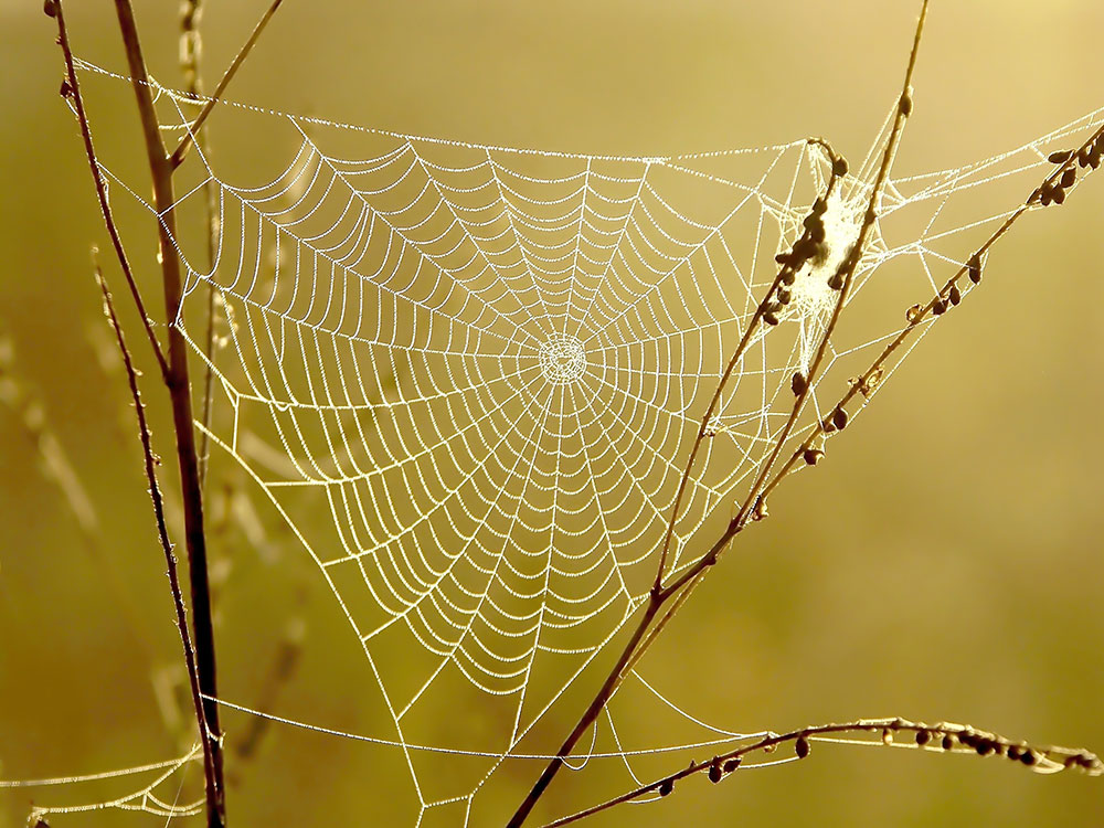 Picture of a strong spider web in Baton Rouge Louisiana